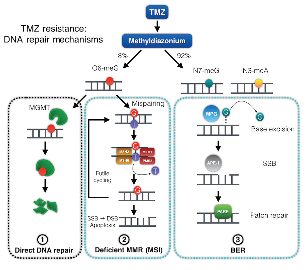A multifaceted review of temozolomide resistance mechanisms in